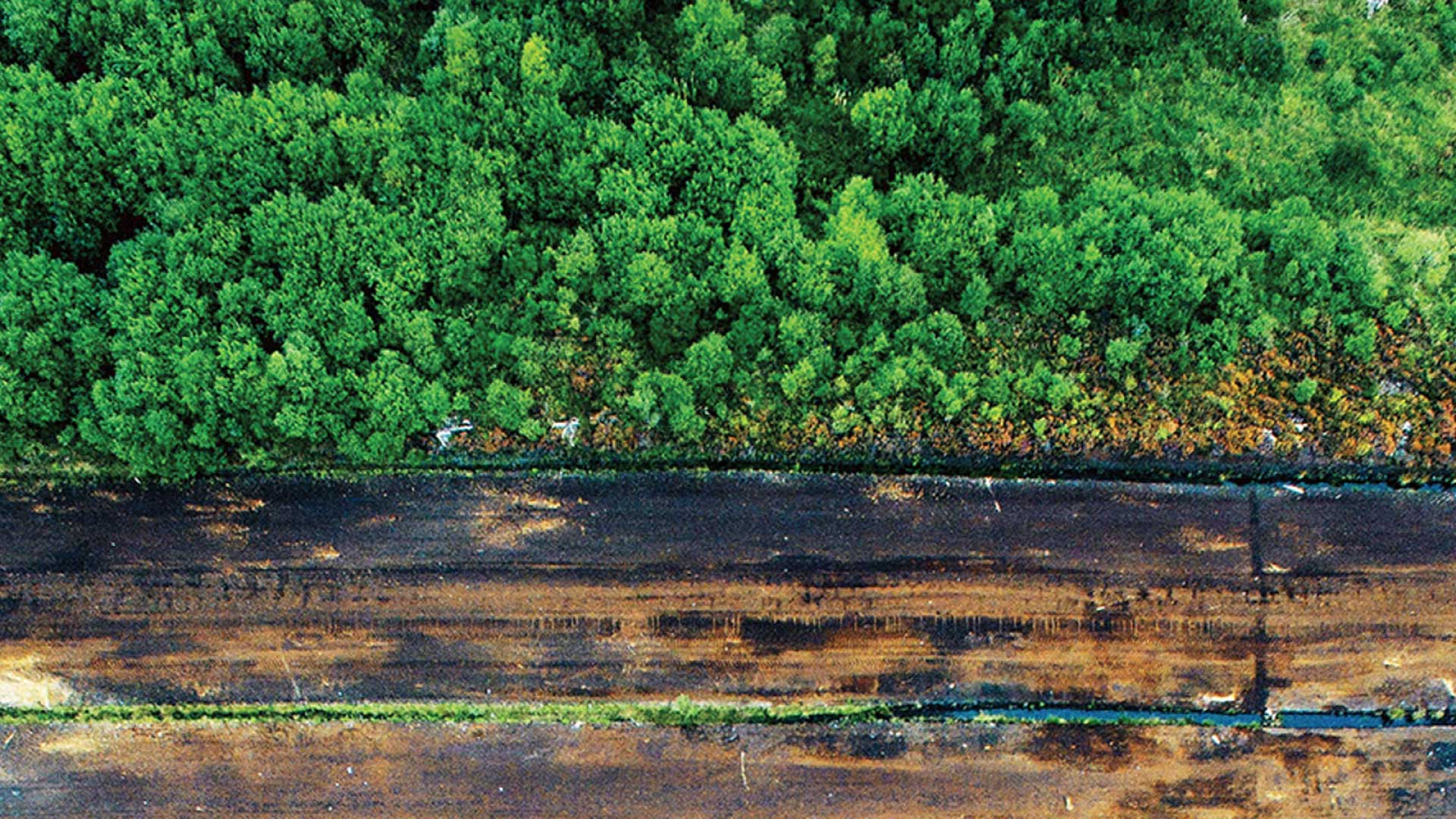 Aerial view of peatlands