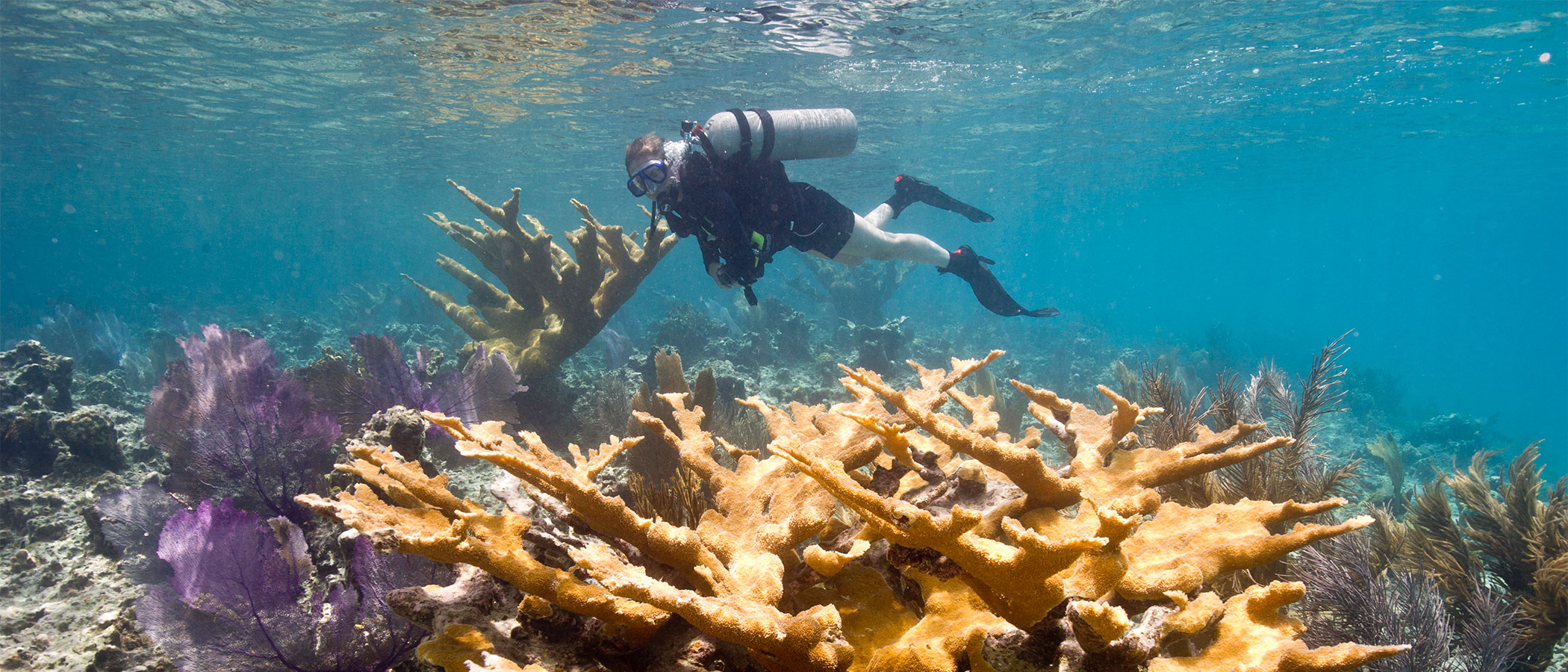 A diver examining coral under water