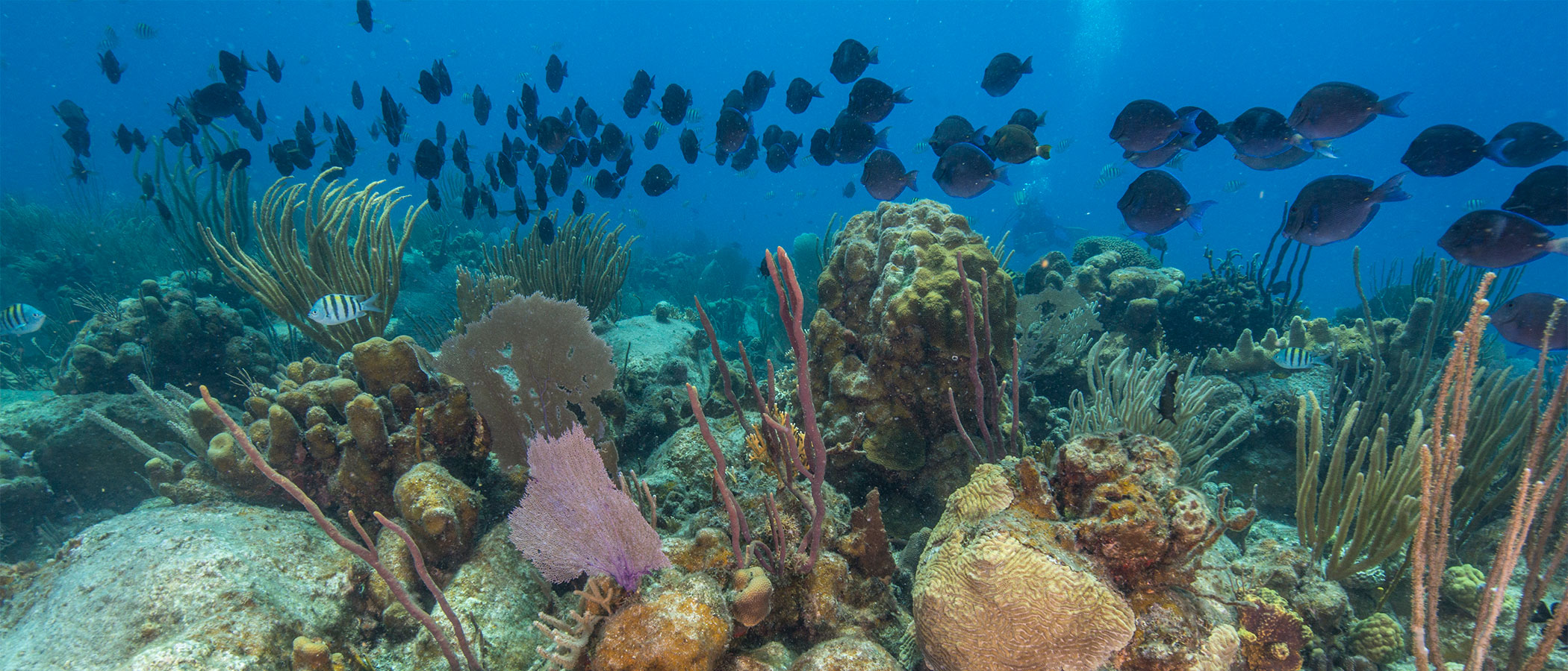 Underwater view of coral reefs