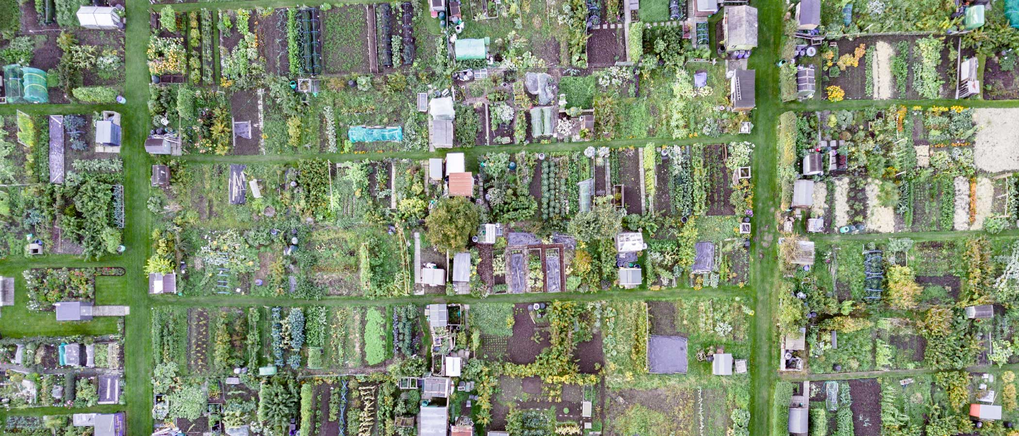 Aerial view of small neighborhood garden plots.