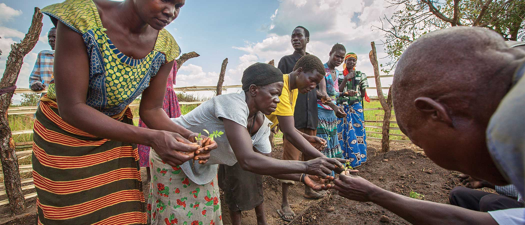 Villagers handle seedlings during a permagarden planting, a training sponsored by CAFWA, Community Action Fund for Women in Africa.