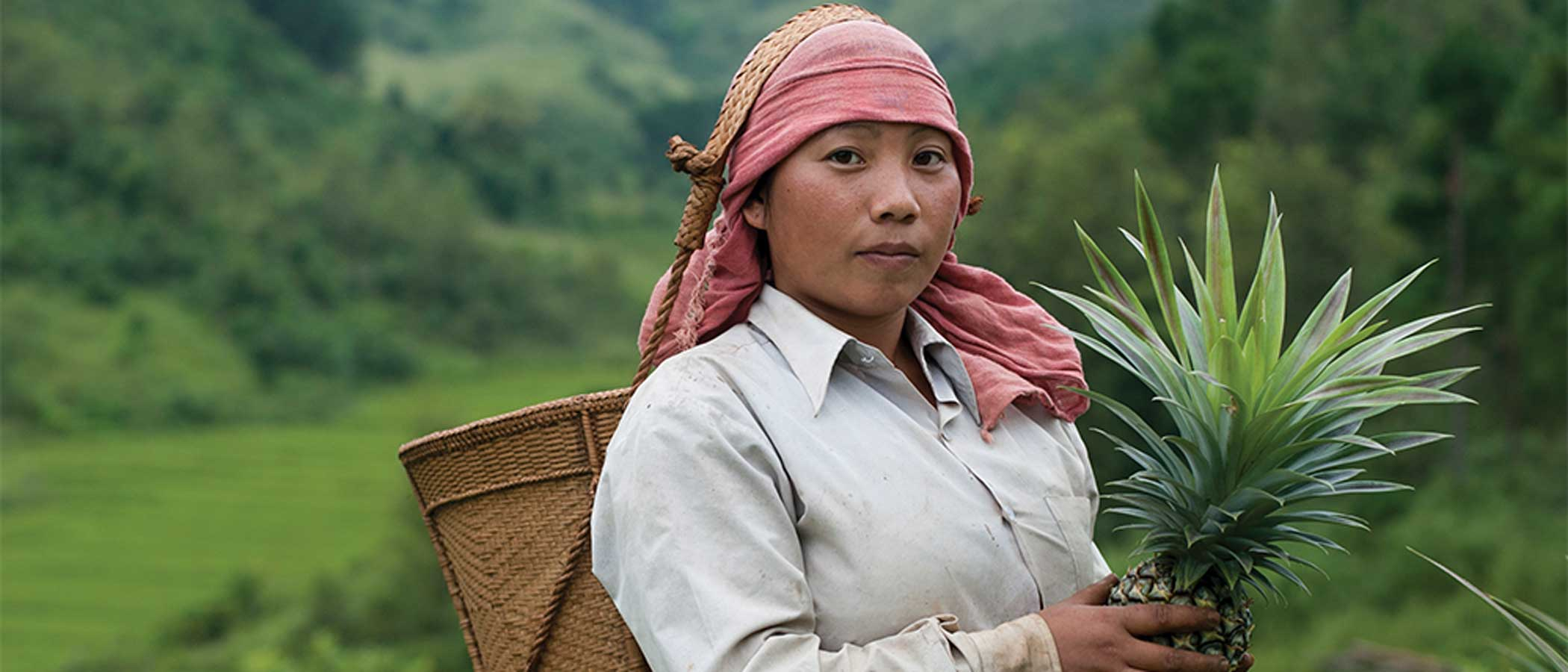 A female farmer holds a pineapple, with a basket hanging on her back by a strap around her head.